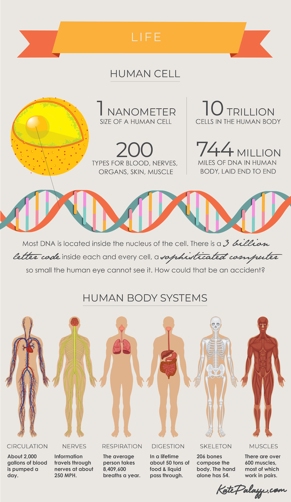 Is there proof God exists? - cell and DNA