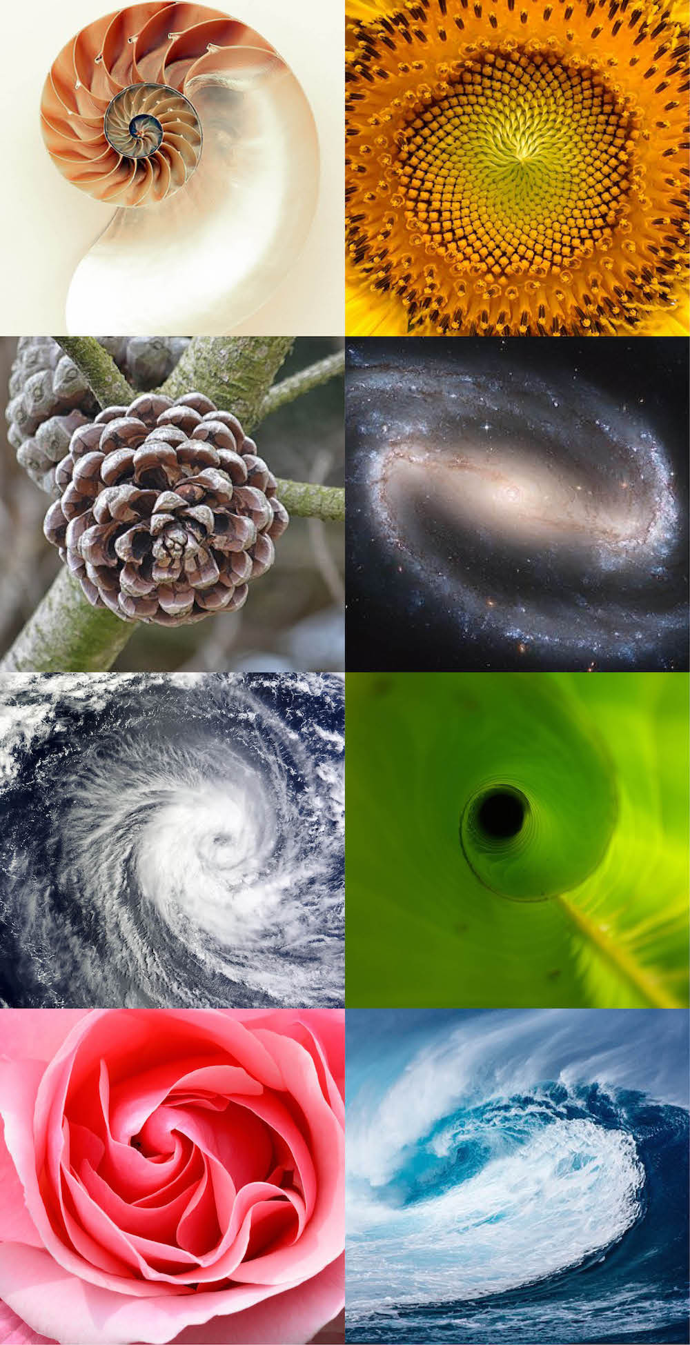 The golden ratio and fibinacci sequence in nature - God's fingerprint